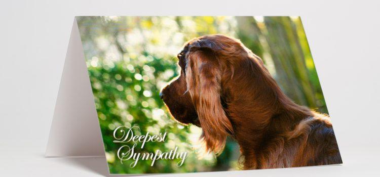 Pet Loss Sympathy Cards